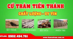 Giới thiệu vựa bán cừ tràm giá rẻ tại TPHCM Tiến Thành