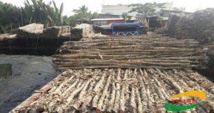 Báo giá bán cừ tràm tại Bình Dương, Đồng Nai, Cần Thơ, Long An, Tiền Giang, An Giang