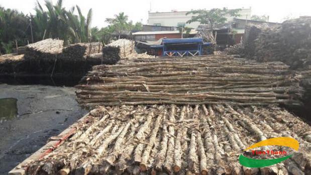 Cừ tràm được sử dụng phổ biến ở vùng đồng bằng sông Cửu Long