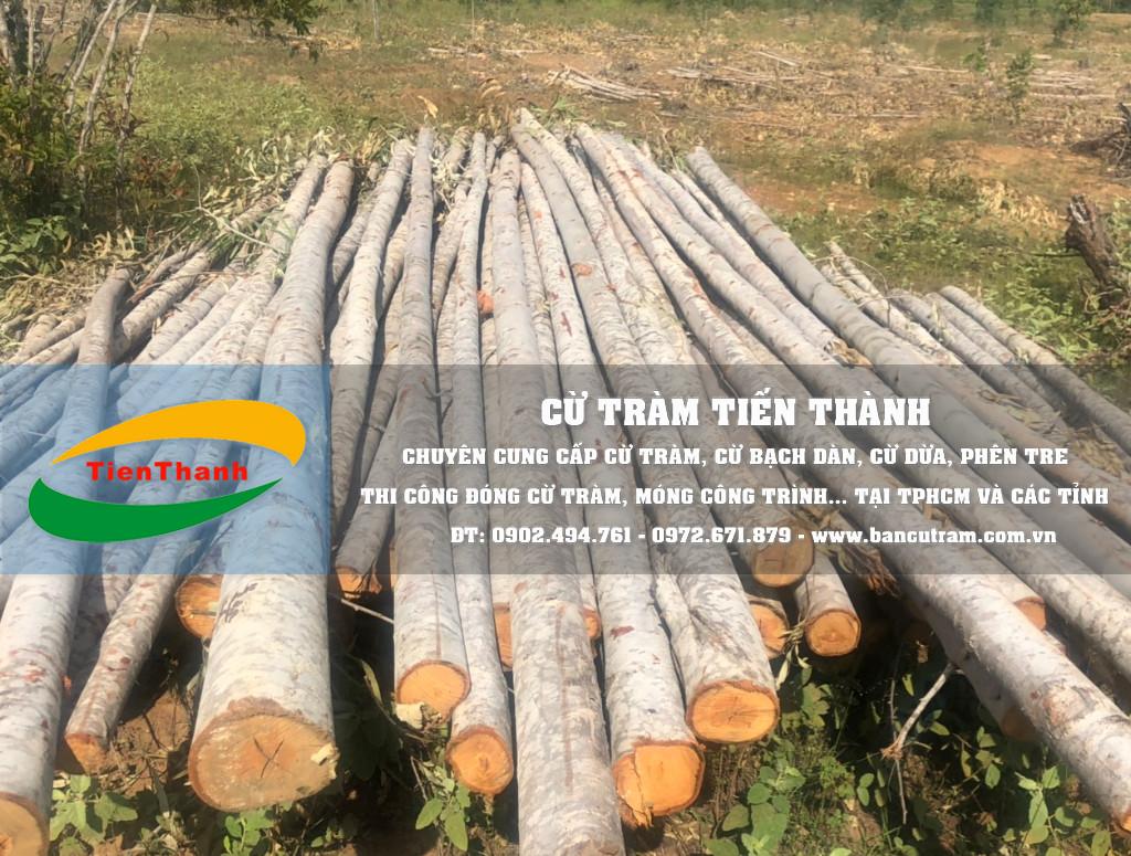 Báo giá cừ bạch đàn 2020, bán cây chống bạch đàn TPHCM giá rẻ