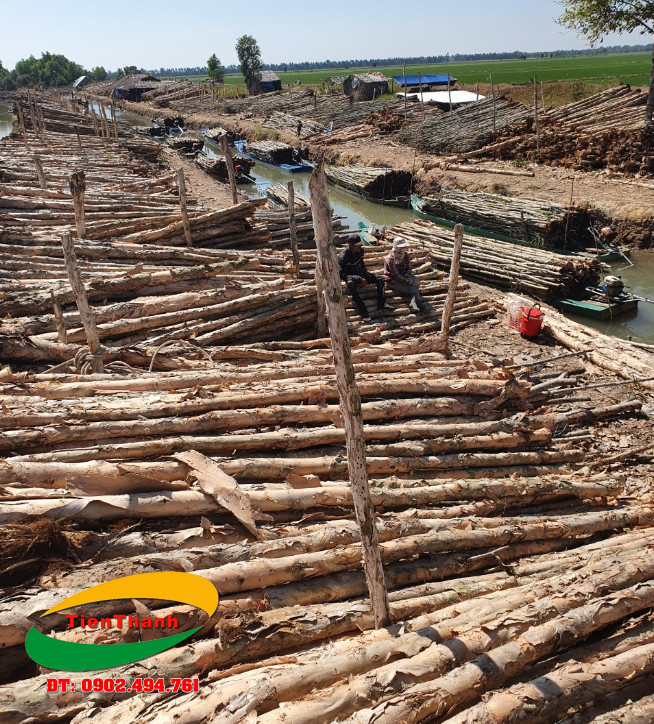 Giá bán cừ tràm tại Tiền Giang - TPHCM giá bao nhiêu tiền 1 cây ?